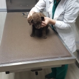 Dr- Wells doing a puppy exam