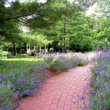 brick path surrounded by flowers